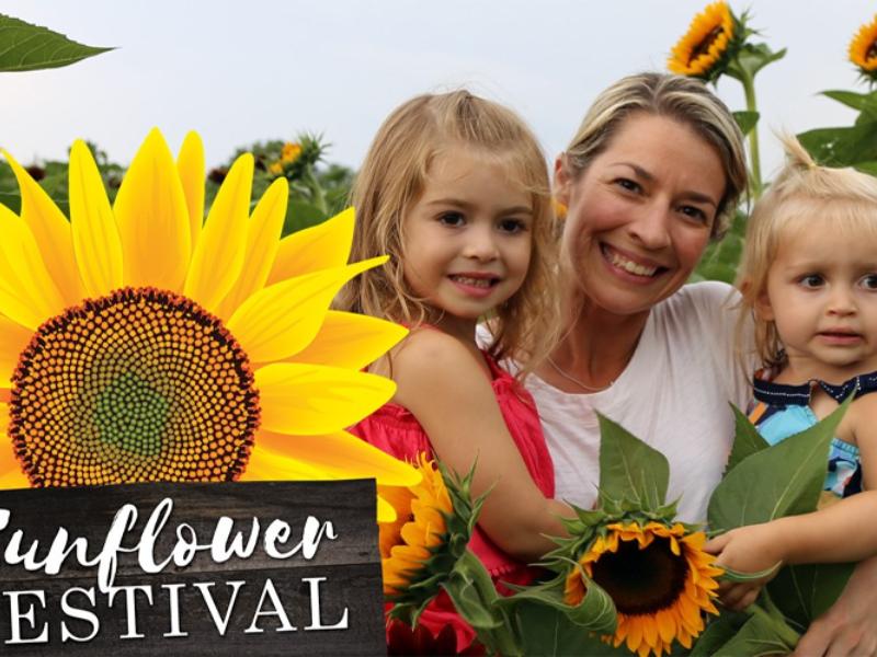 Sunflower festivle